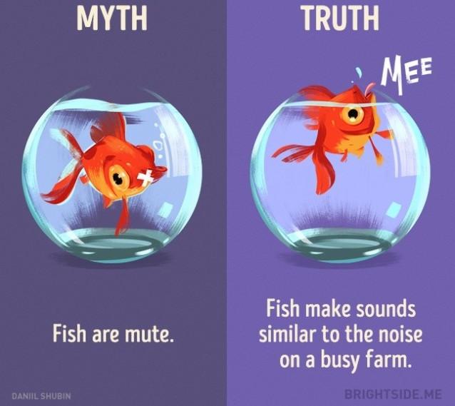 Cá bị câm? Sự thật là cá tạo ra ra âm thanh tương tự như tiếng ồn trên một trang trại bận rộn.
