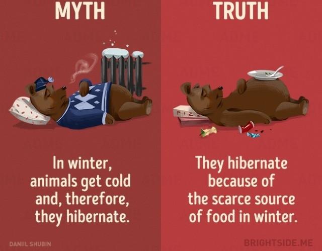 Mùa đông, động vật bị lạnh nên chúng đi ngủ đông? Sự thật là chúng ngủ đông vì sự khan hiếm thực phẩm trong mùa đông.