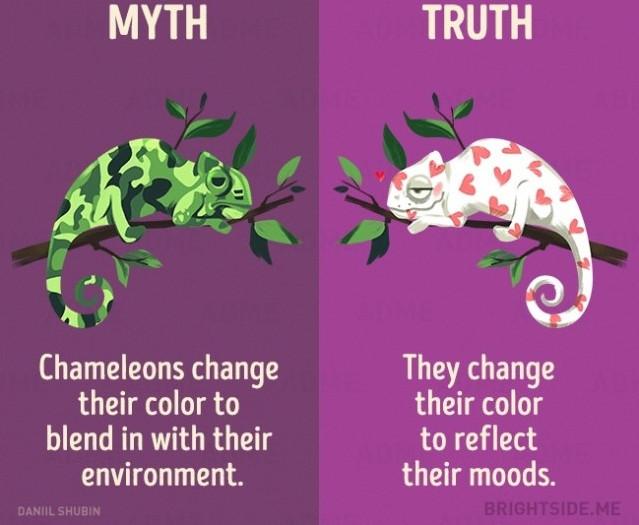 Tắc kè hoa thay đổi màu sắc để hòa lẫn với môi trường của chúng? Sự thật là chúng thay đổi màu sắc để phản ánh tâm trạng của chúng.