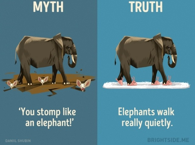 """""""Bạn dậm chân như một con voi!"""" Sự thật là voi đi rất yên lặng."""