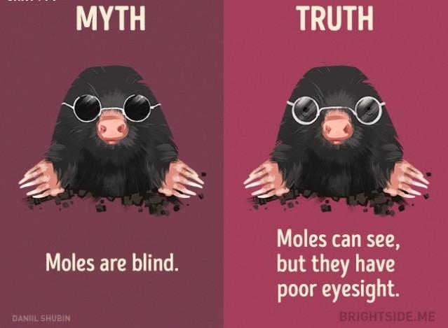 Chuột chũi bị mù? Sự thật là chúng có thể nhìn thấy, chỉ là thị lực kém mà thôi.