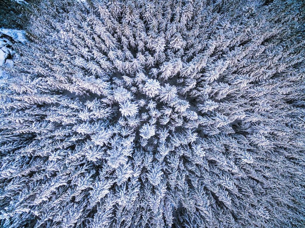Những cây thông phủ tuyết trắng ở Rattlesnake Ledge, North Bend, Washington.