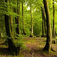 Những loại cây chịu ảnh hưởng nặng nề nhất của biến đổi khí hậu