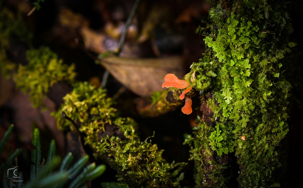 Hệ sinh thái rừng của rừng thuộc vùng khí hậu nhiệt đới, núi cao, có nhiều loài động thực vật quý hiếm.