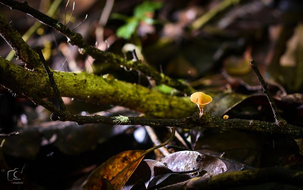 Trong rừng, có nhiều họ thực vật được ghi trong Sách đỏ Việt Nam.