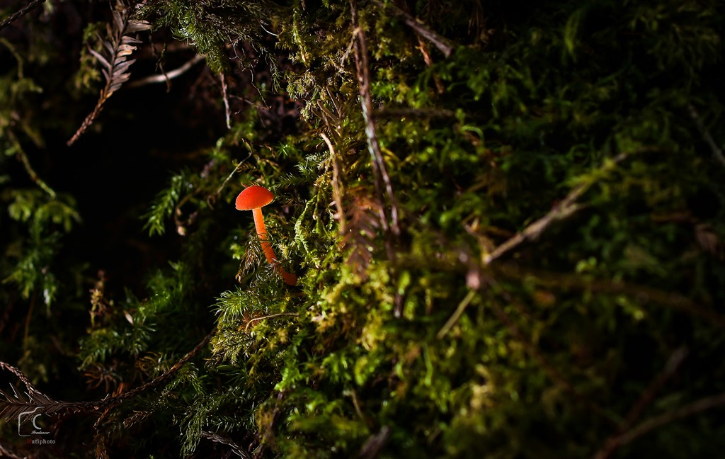 Ngoài phong lan, nấm rừng Bidoup cũng được đánh giá là phong phú.