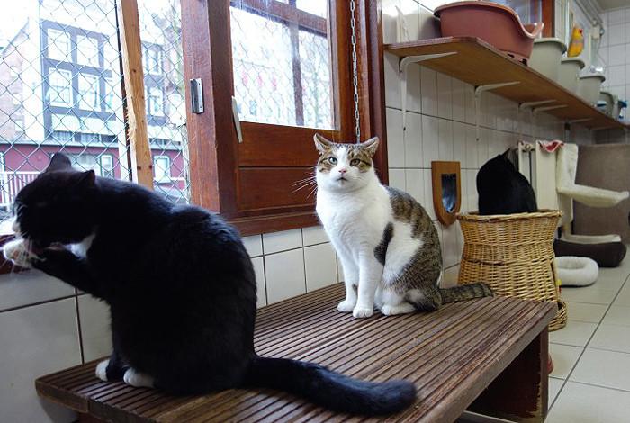 Những chú mèo được chăm sóc chu đáo tại De Poezenboot.