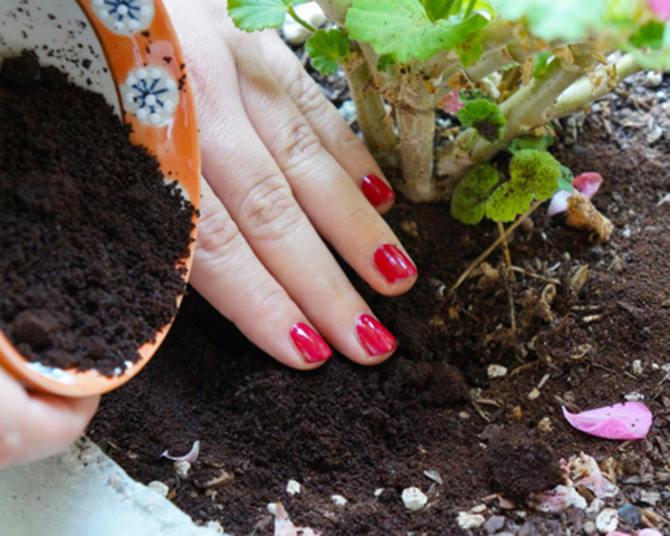 Bã cà phê làm cho đất màu mỡ, giàu axit hơn