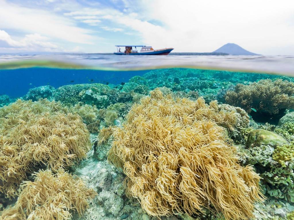 Công viên biển Bunaken, Indonesia