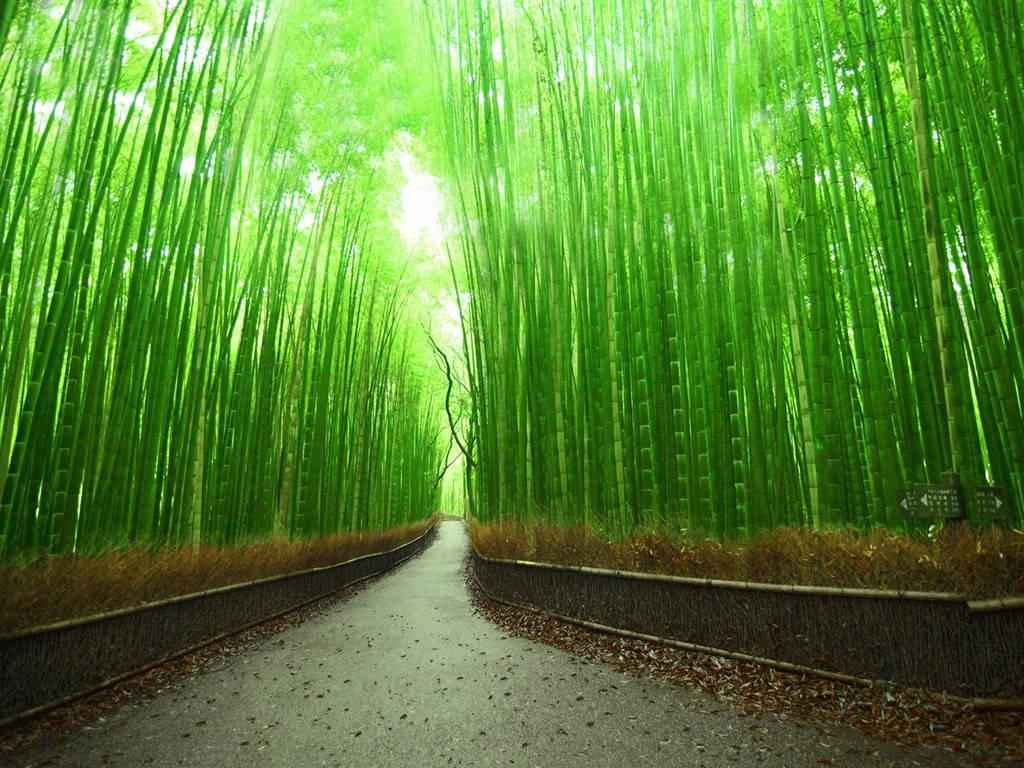 Arashiyama, Kyoto, Nhật Bản