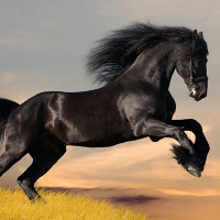 Sự thật thú vị về loài ngựa