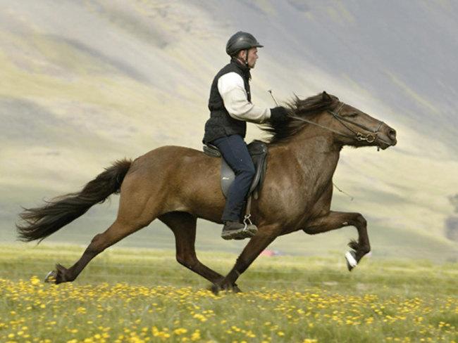 Ngựa có thể trở thành người bạn chung thủy nhất và lâu bền nhất.
