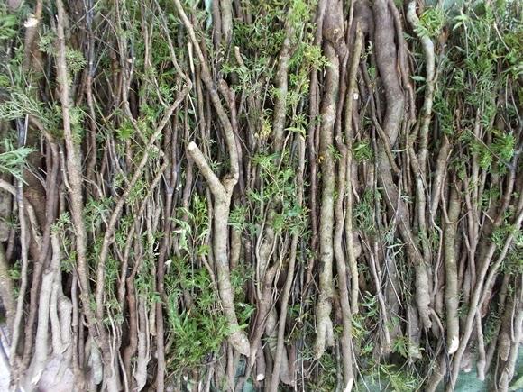 Tất cả các bộ phận của cây đều có công dụng trong y học
