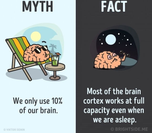 Sự thật là hầu hết các vùng vỏ não làm việc hết công suất ngay cả khi chúng ta đang ngủ.