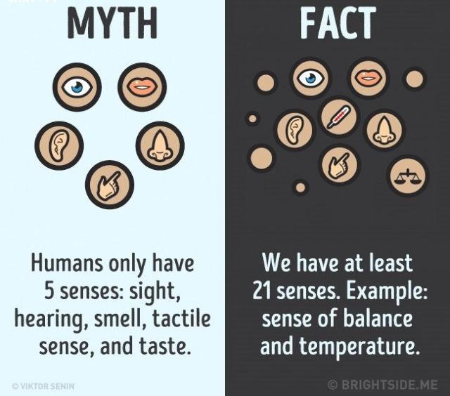 Sự thật là chúng ta có ít nhất 21 giác quan, chẳng hạn như cảm giác cân bằng và nhiệt độ.