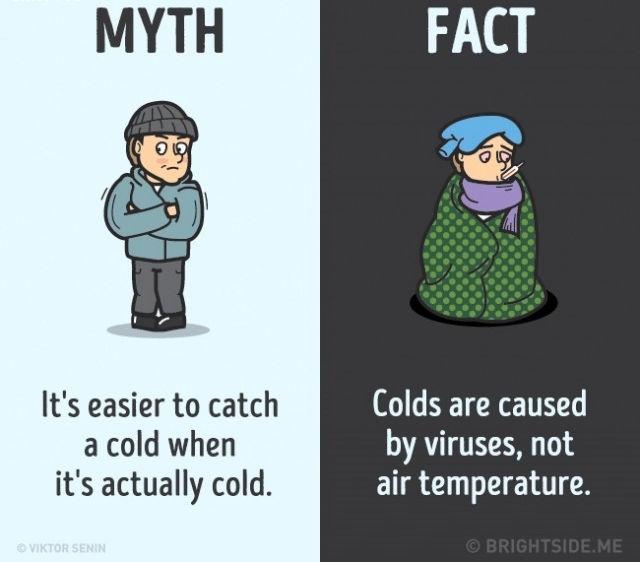 Sự thật là cảm lạnh do vi rút gây ra, không phải do khí hậu.