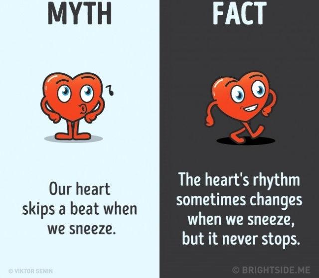 Sự thật là nhịp tim đôi khi có thể thay đổi khi bạn hắt hơi, nhưng nó không bao giờ dừng lại.