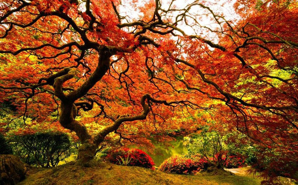 Vẻ lộng lẫy của mùa thu ở Portland, Mỹ.