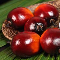 Tại sao phải trộn dầu cọ với các loại dầu ăn khác