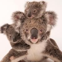 12 bức ảnh đẹp về tình mẹ con trong thế giới động vật