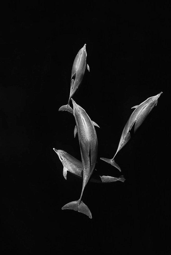 """""""Được thấy những loài động vật to lớn mà vẫn duyên dáng dưới đại dương đã là điều tuyệt vời, việc chúng hòa nhập với cuộc sống xung quanh, điều đó hơn cả sự tinh tế mà một nhiếp ảnh gia có thể thấy được""""."""