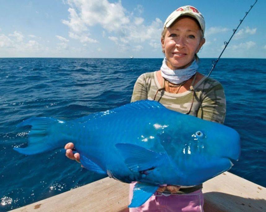 Cá vẹt lam hay cá vẹt xanh (Scarus coeruleus), một loài cá có màu xanh lam trong họ cá vẹt, thuộc chi Scarus.