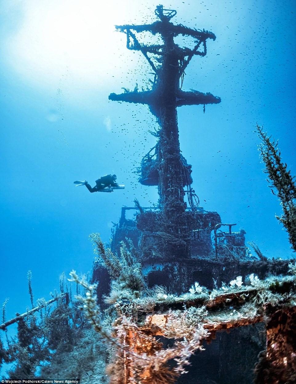 Các sinh vật biển nhiều màu đã xâm chiếm xác tàu P29.