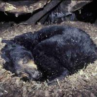 Vì sao một số loài vật vẫn sống dù cho máu bị đóng băng?
