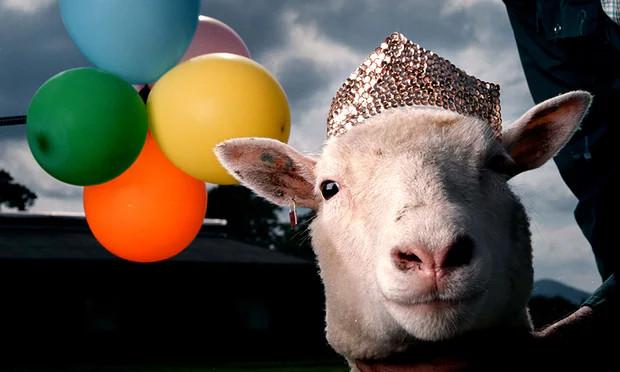 Cừu Dolly.