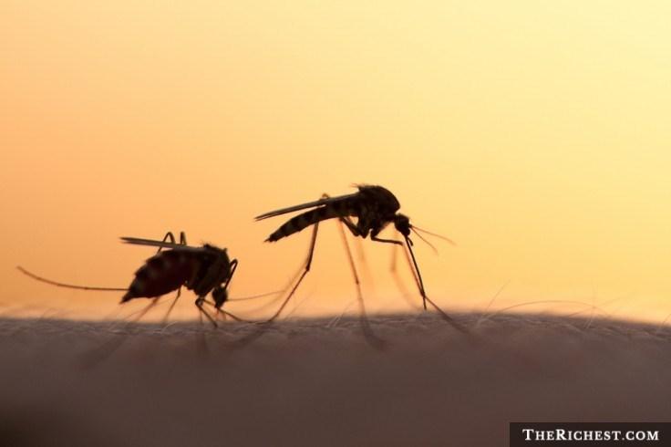 Kết quả nghiên cứu cho thấy muỗi là loài vật nguy hiểm và là kẻ giết người nhiều nhất thế giới khi gây ra cái chết của khoảng 600.000 người mỗi năm.