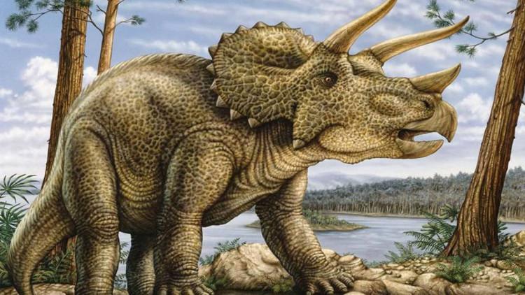 Hình mẫu của một loài khủng long tam sừng.