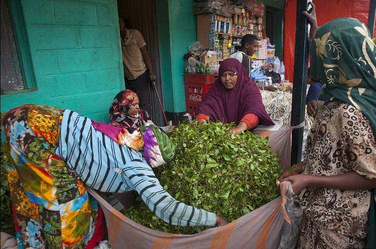 Cảnh tiêu thụ lá Khát tấp nập tại Ấn Độ.