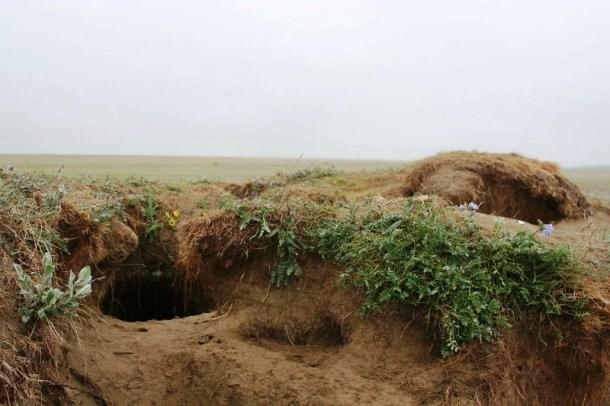 Cáo Bắc cực sống trong các hang dưới đất, có niên đại từ hàng thế kỷ, được sử dụng bởi nhiều thế hệ cáo.