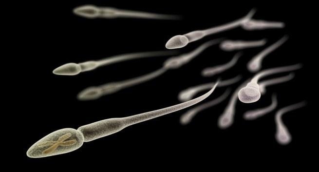Tinh trùng có hình dáng giống những chú nòng nọc