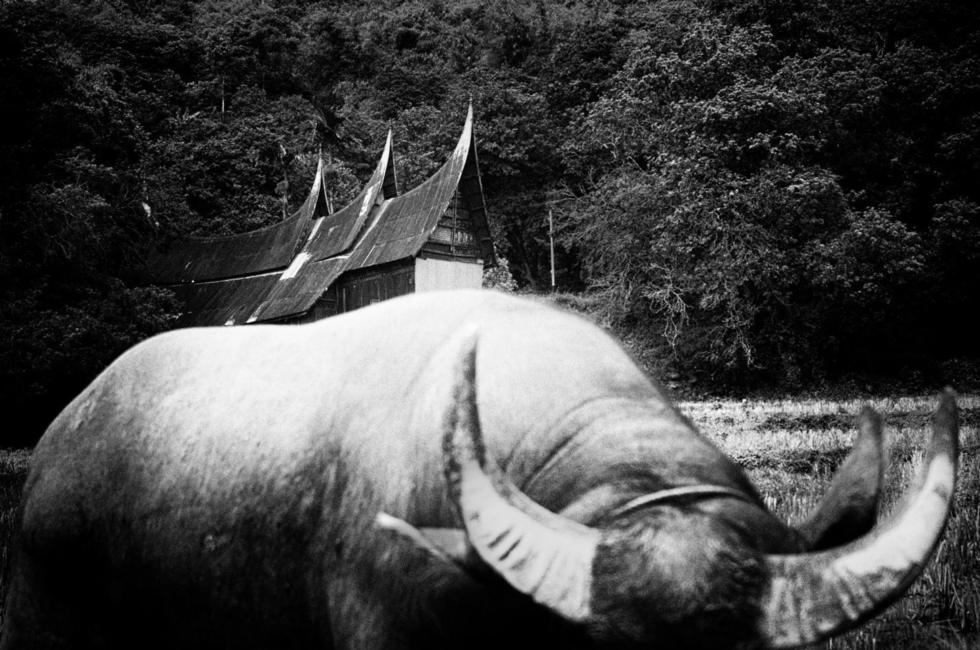 Ngôi nhà của người Minangkabau với những mái hiên cong như hình sừng của con trâu.