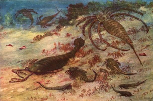 Bọ cạp là một trong những động vật cổ xưa nhất trên Trái đất.