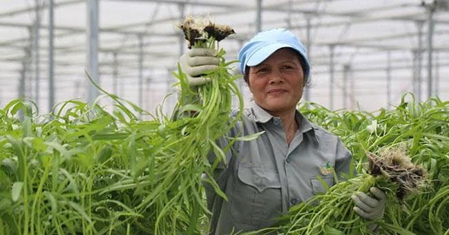 Làm nông nhàn hơn nhờ công nghệ nhà kính