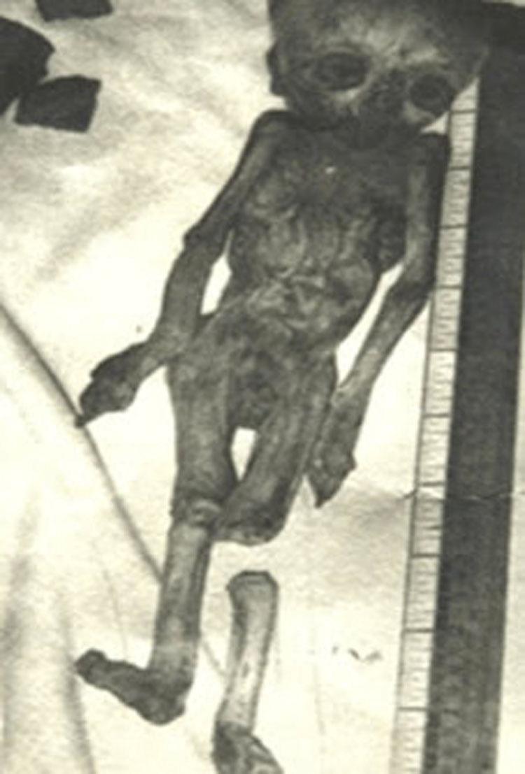 Hài cốt của một chủng tộc kỳ lạ, cơ thể của những người này có kích thước nhỏ bất thường và chiếc đầu lớn.