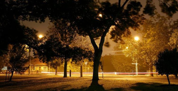 Ô nhiễm ánh sáng đô thị là nguyên nhân làm cho cây đâm chồi sớm hơn.