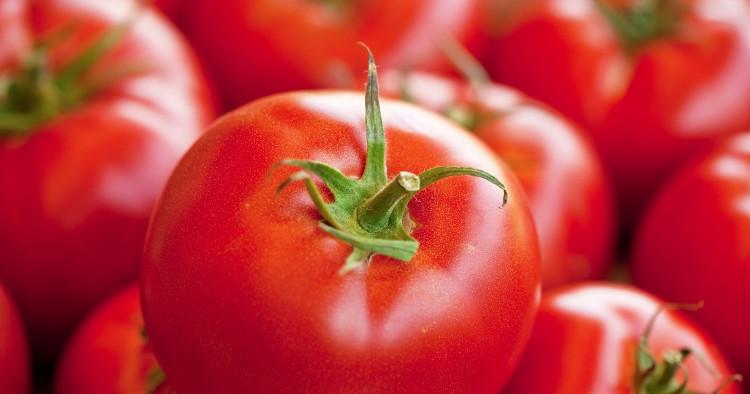 Nên để cà chua ở những nơi râm mát.