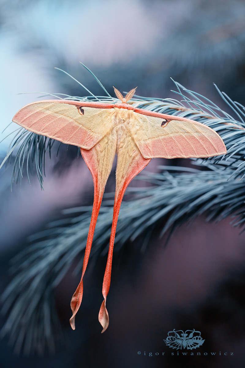 Nhiếp ảnh gia Igor Siwanowicz là một nhiếp ảnh gia cực nổi tiếng với những bức ảnh chụp cận cảnh chân dung của nhiều loài động vật nhỏ bé.