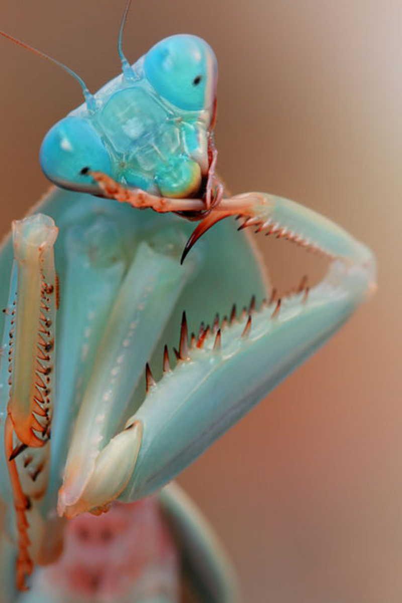 Thông qua những bức ảnh sinh động của nhiếp ảnh gia Igor, người xem có thể thay đổi nhận thức về những loài động vật tưởng như tầm thường này.