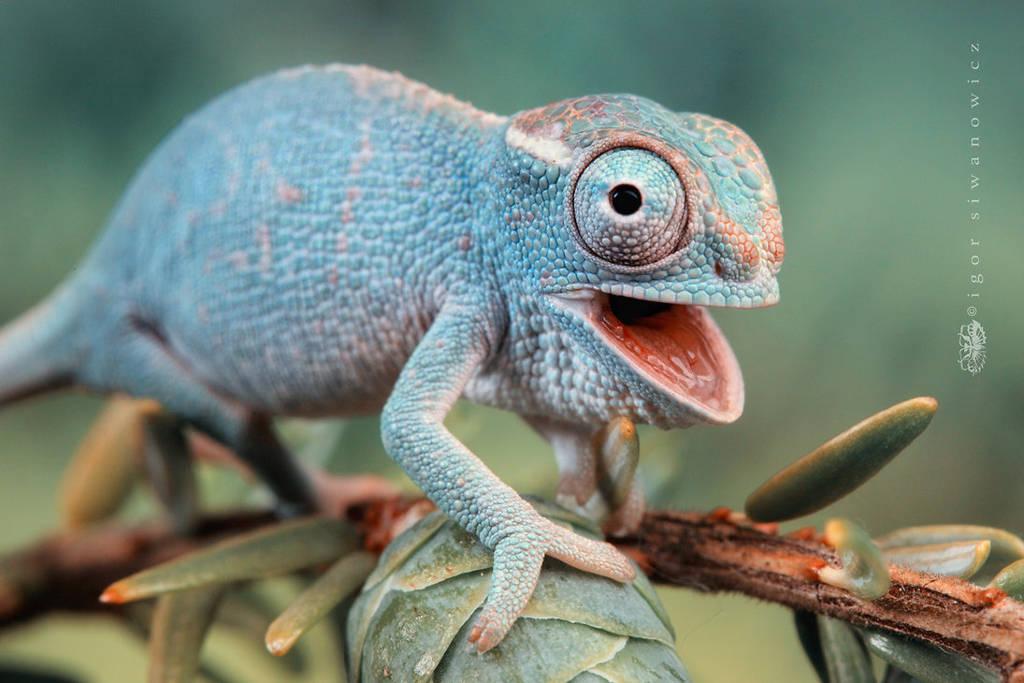 Nếu tìm hiểu kỹ, chắc chắn bạn sẽ thấy những loài động vật nhỏ nhắn rất thú vị, sở hữu những kỹ năng đặc biệt đồng thời có lực hấp dẫn không nhỏ.