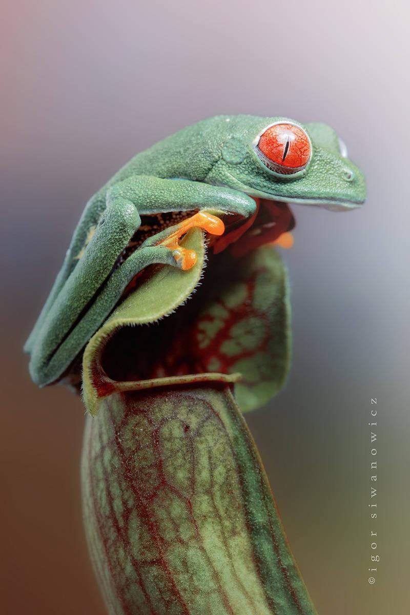 Để chụp được những bức ảnh tuyệt đẹp như thế này, nhiếp ảnh gia Igor cũng mất rất nhiều công sức, tâm huyết và thời gian.