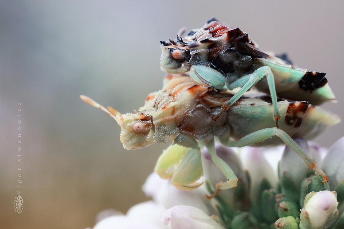 Nhiếp ảnh gia tài năng sử dụng kỹ thuật chụp ảnh macro, nhấn vào chủ thể duy nhất là những con côn trùng, những con tắc kè hoa, những con bướm xinh đẹp...