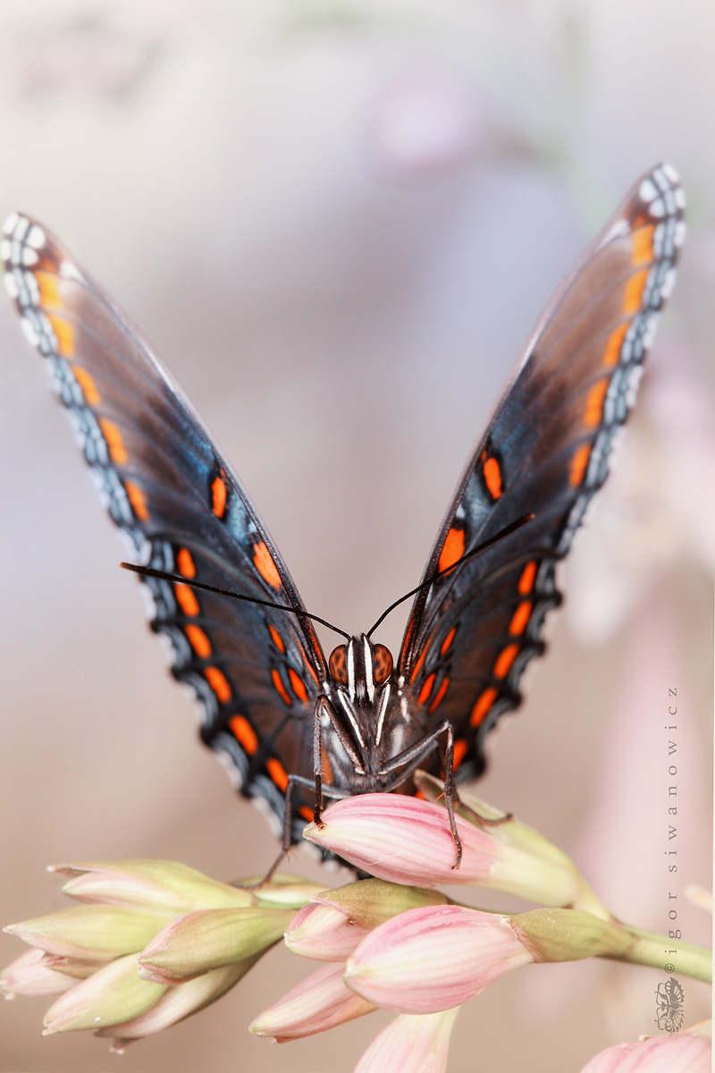 Gần như toàn bộ nền ảnh phía sau bị mờ, chân dung của những loài côn trùng cũng nhờ thế trở nên sắc nét, sống động, chân thực hơn bao giờ hết.