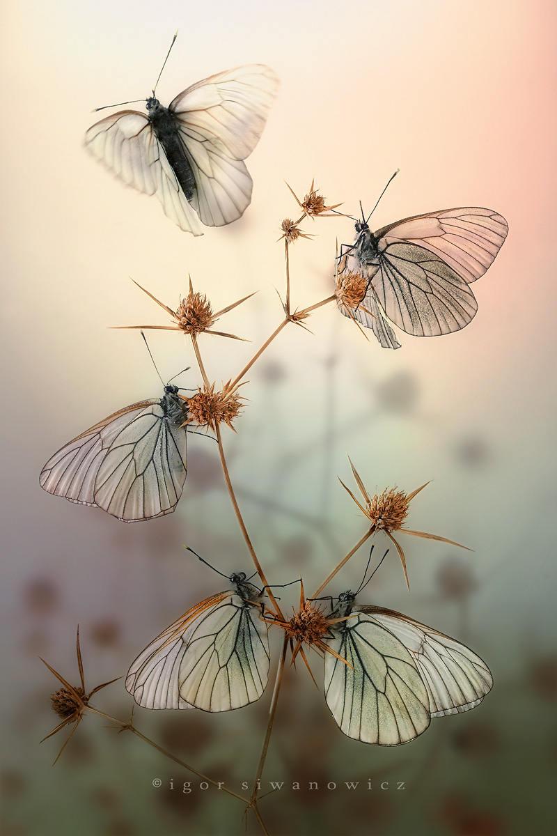Trong mỗi bức ảnh của Igor Siwwanowicz, người xem có thể cảm nhận được sự trân trọng, thấy được vẻ đẹp riêng của từng sinh vật.