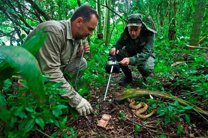 Đảo Rắn nguy hiểm tới mức hải quân Brazil đã cấm tất cả mọi người, trừ một số nhà khoa học, bước lên hòn đảo.