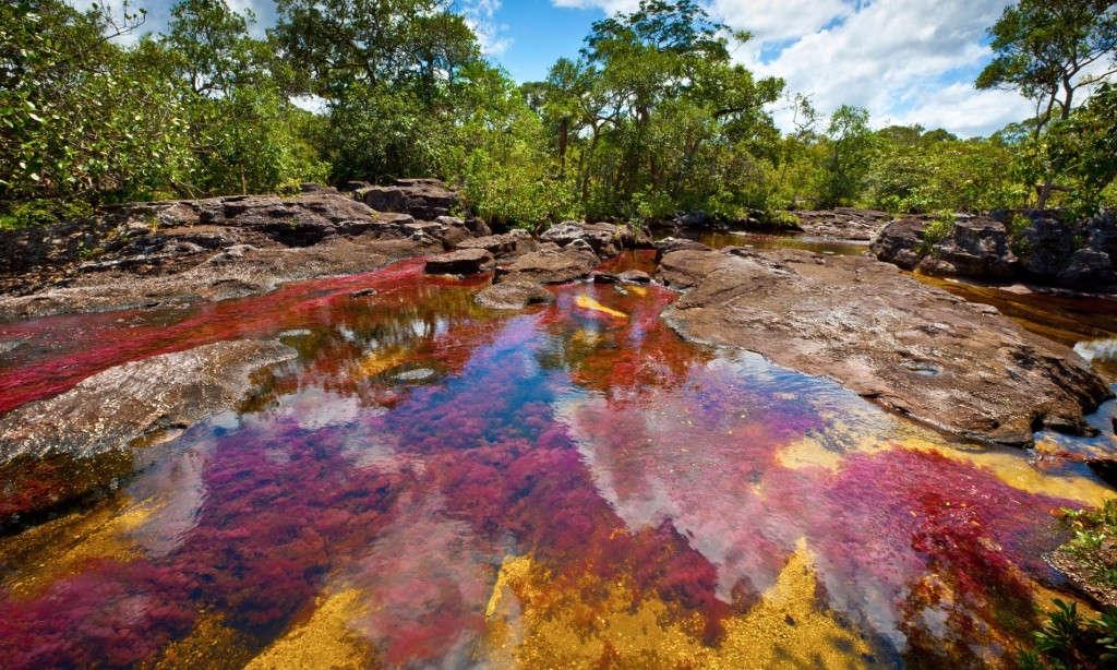 Sông Cano Cristales, Serrania de la Macarena, Colombia