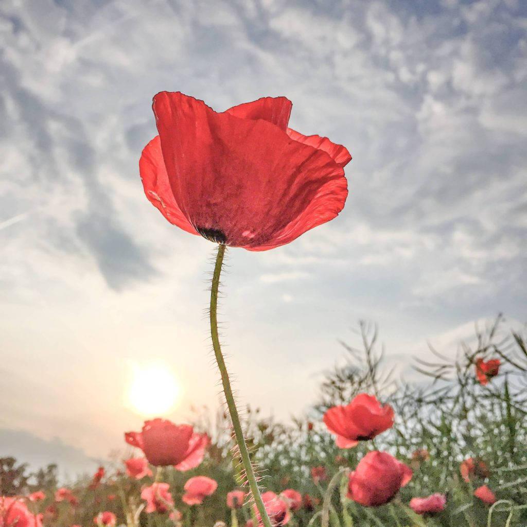 Giải nhất chủ đề về hoa